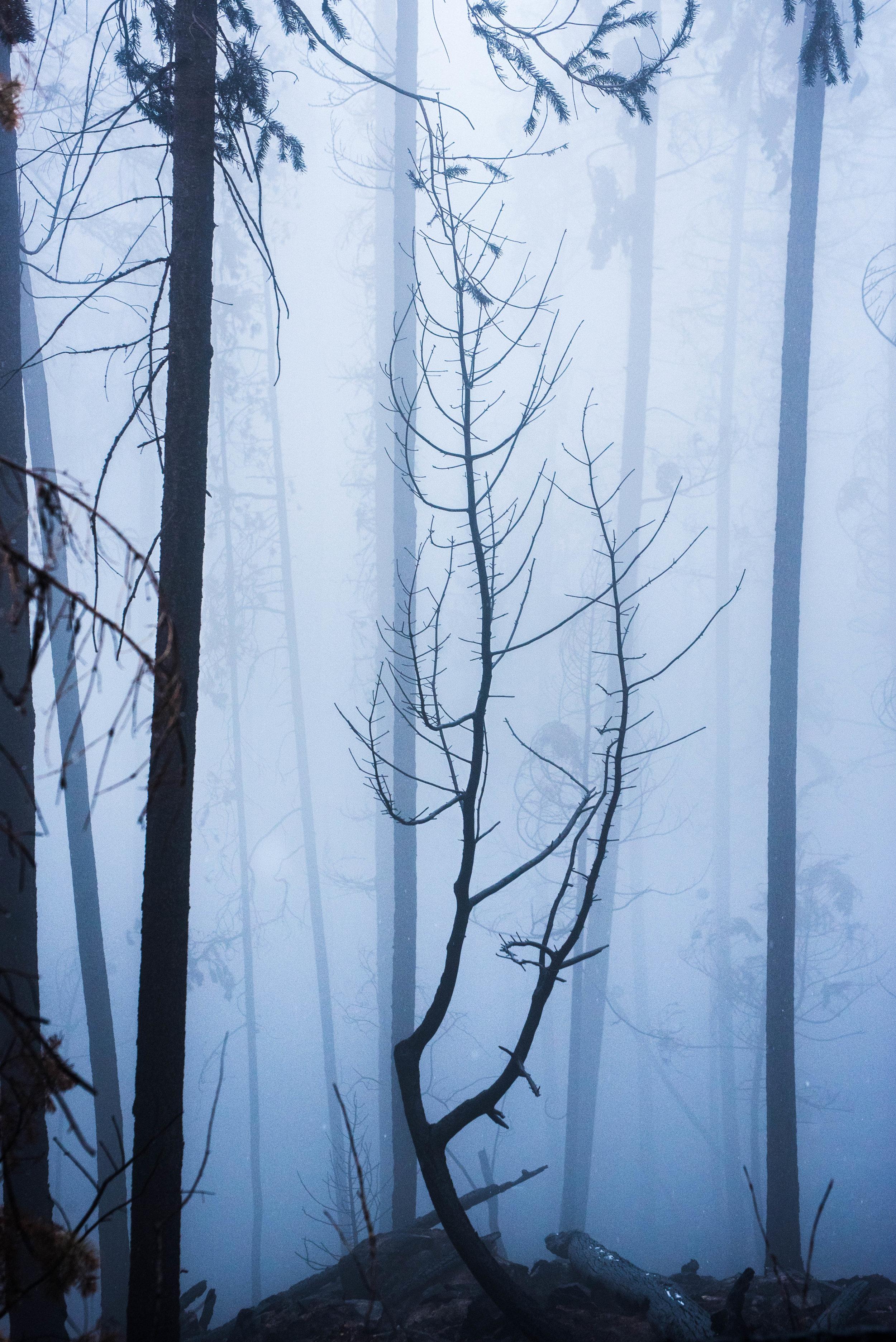 TheForest (1 of 1).jpg