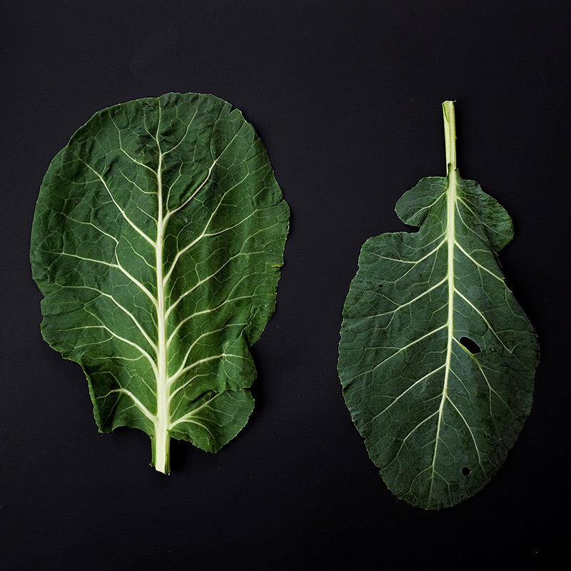 fob leaves.jpg