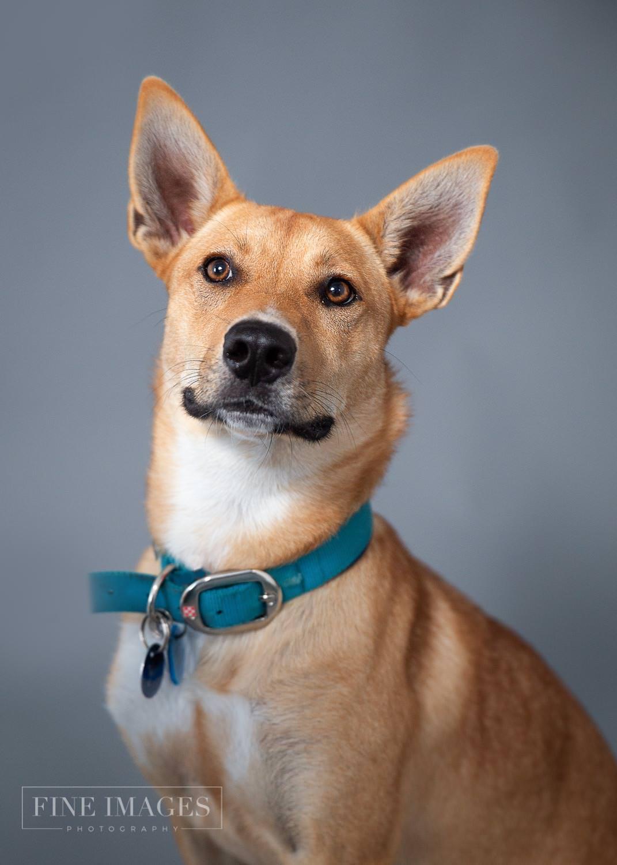 Yindi-rescue-dog