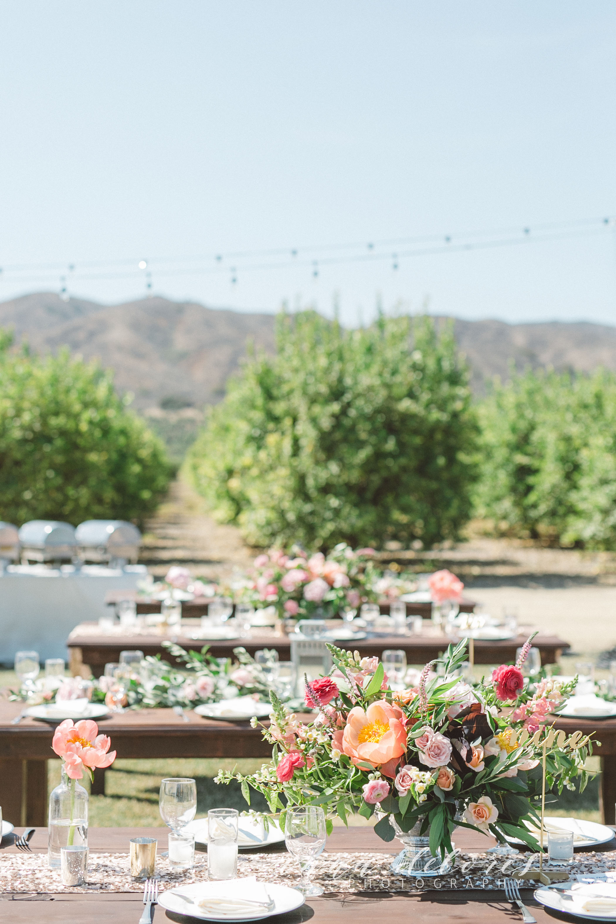 Anna Delores Photography_Casey & Chad at Limoneira 06.20.15-20-2.jpg