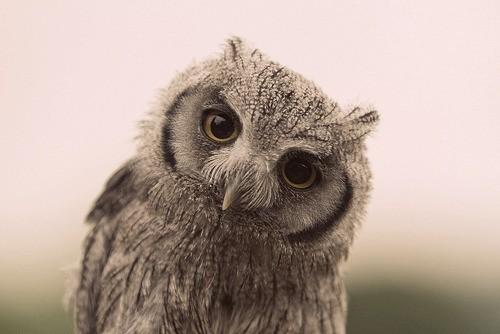 wise-owl-2.jpg