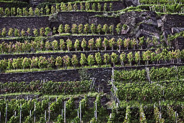 vineyards germany.jpg