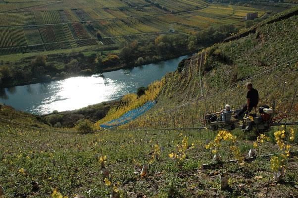 mosel steep vineyards.jpg
