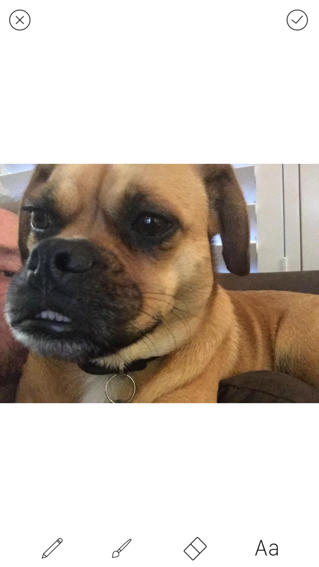 rosie dog story editor screenshot