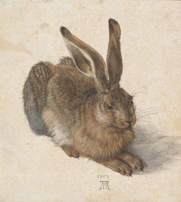 Albrecht Dürer Feldhase (C) Albertina, Wien