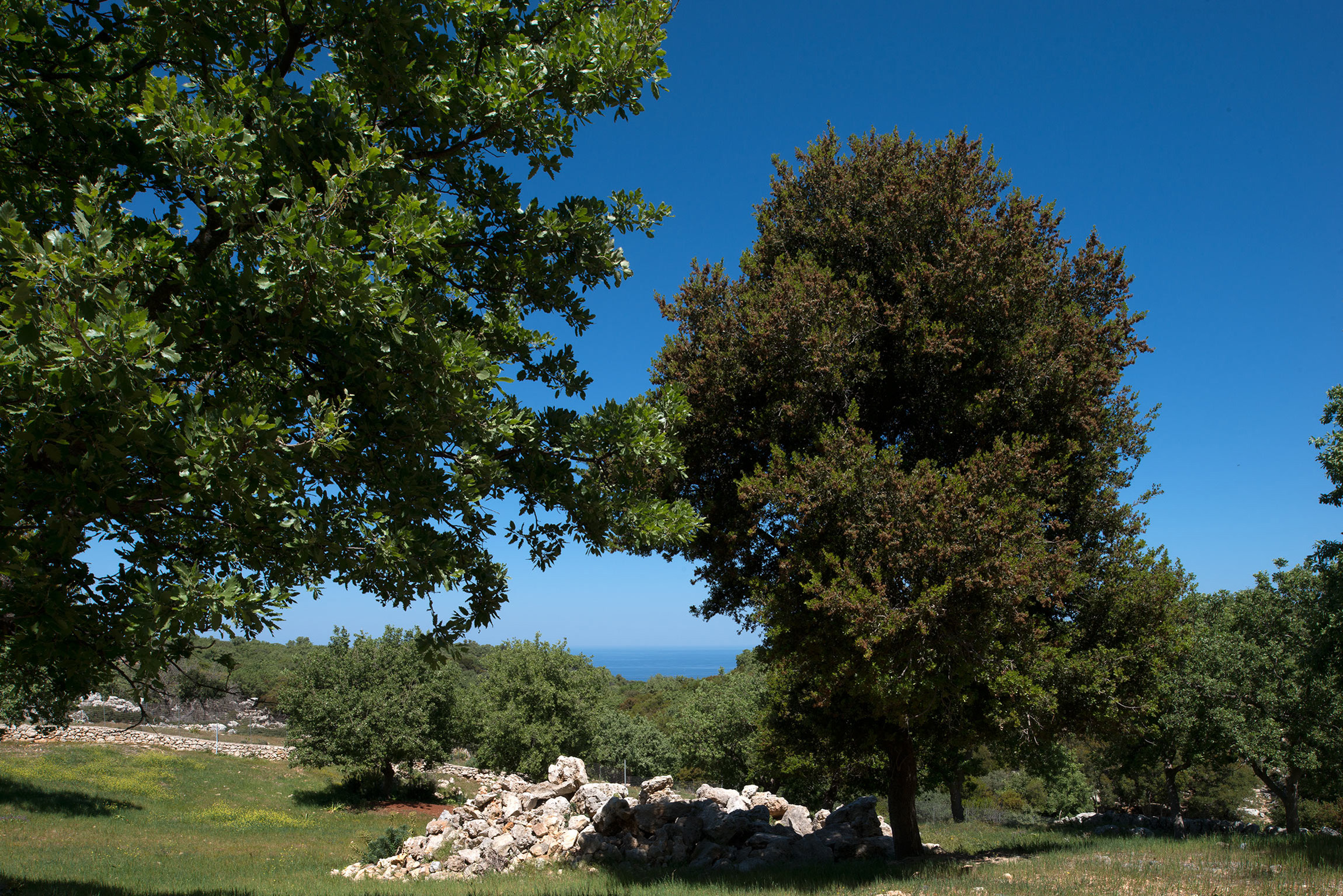 forest-villas-crete-farm-exterior-1.jpg