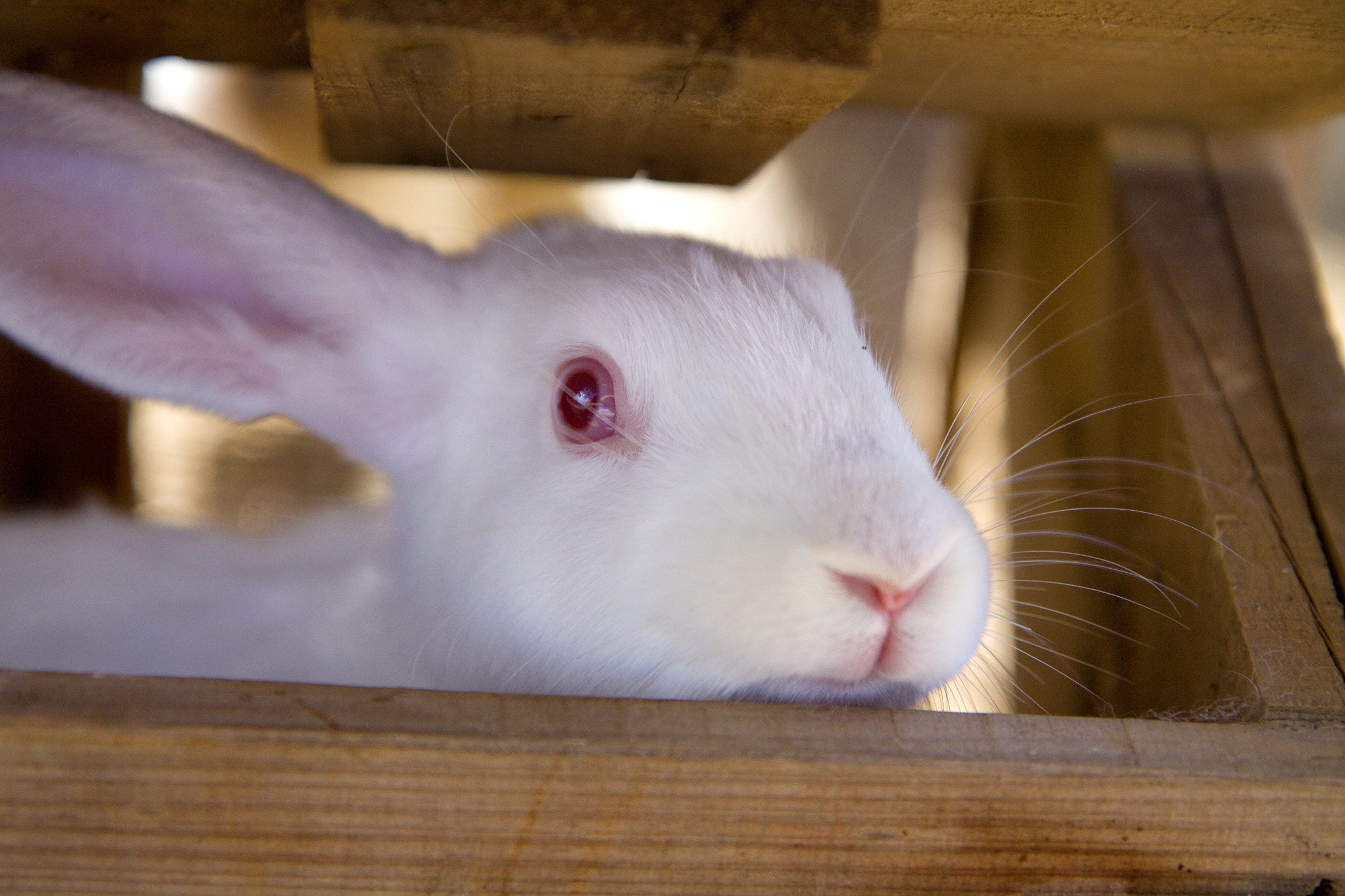 forest-villas-crete-farm-rabbit.jpg