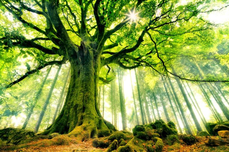 grand-arbre-765x510.png