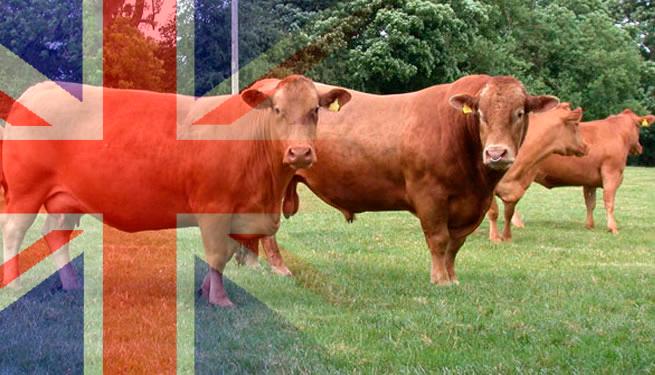 Great Britain - Great Livestock