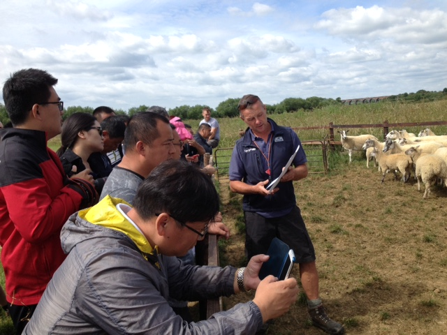 Jamie Wild presents his Mule ewes with their Charollais-sired lambs