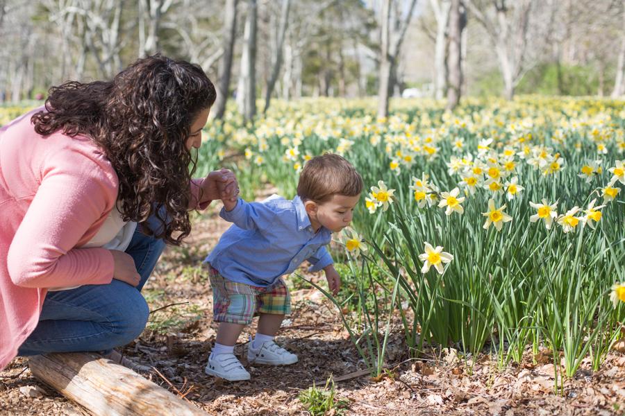 daffodil field.jpg