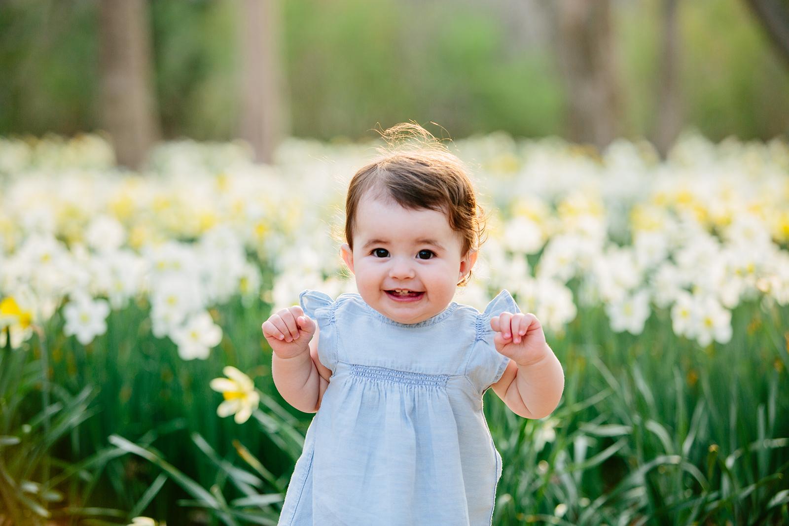 daffodil field dartmouth.jpg