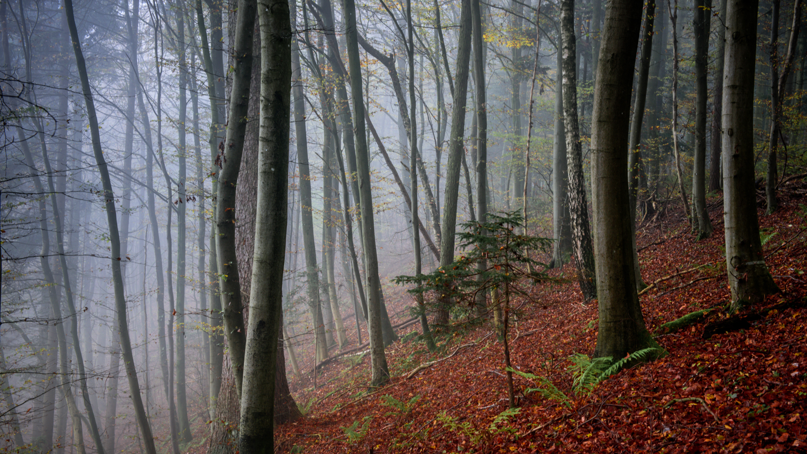 Zsofia_Daniel_Trees.jpg