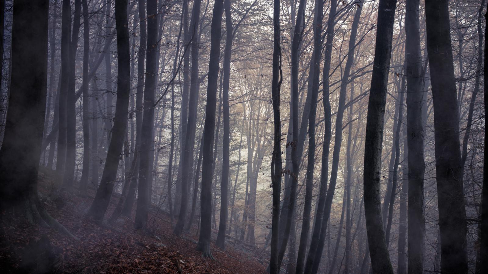 Zsofia_Daniel_Trees-6.jpg