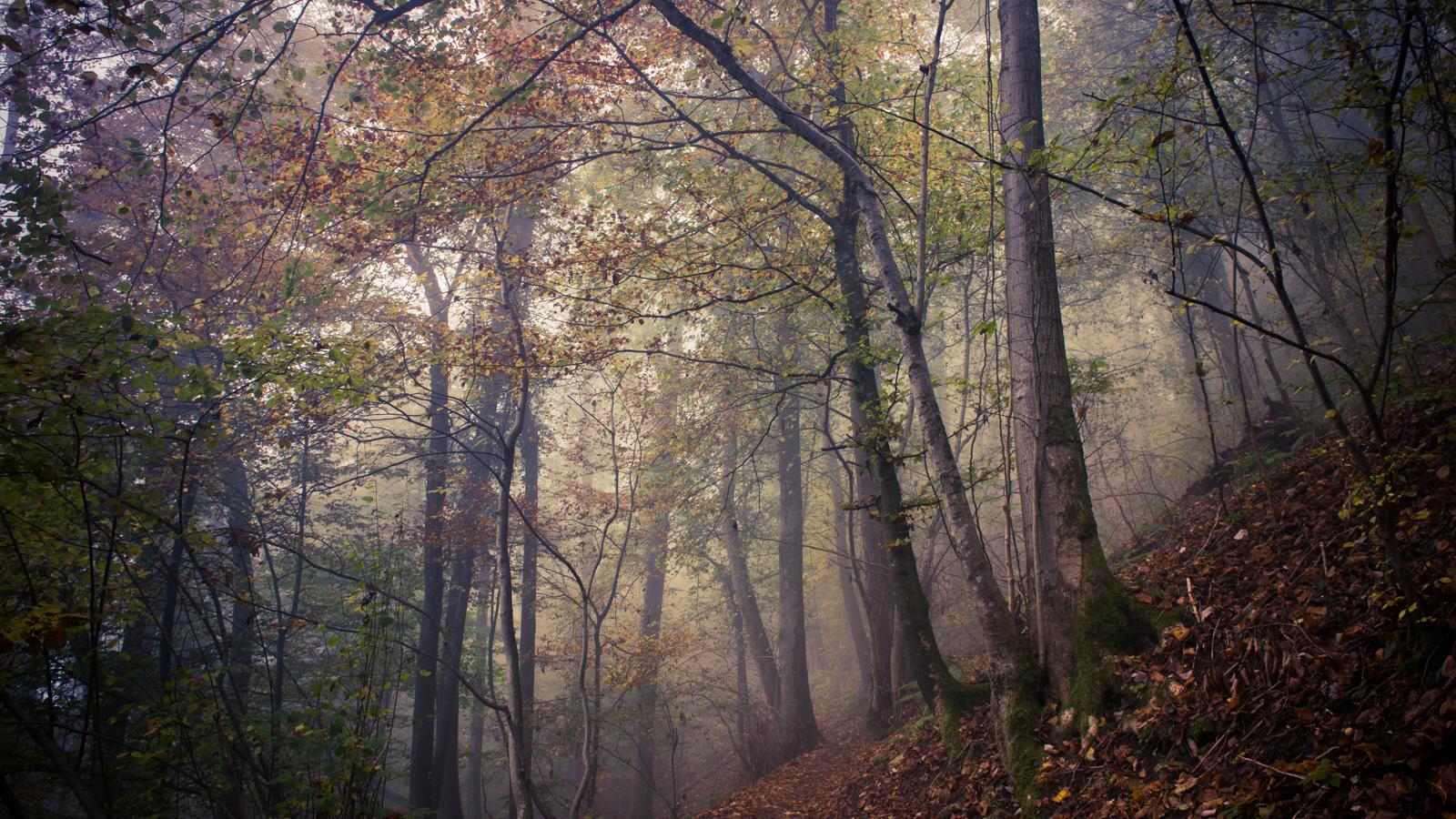 Zsofia_Daniel_Trees-5.jpg