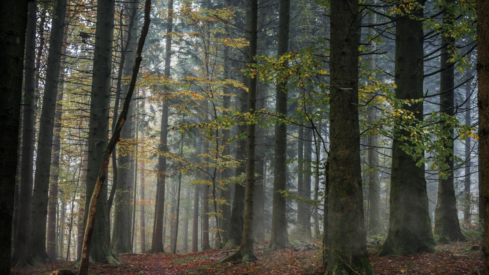 Zsofia_Daniel_Trees-7.jpg