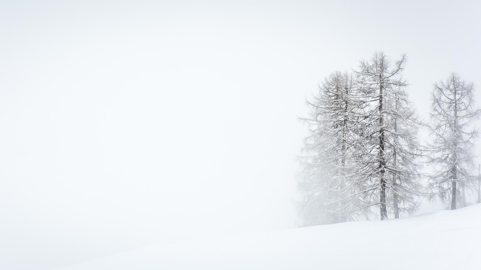 Zsofia_Daniel_Trees-12.jpg