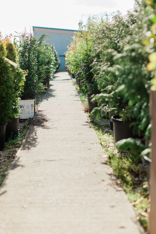 Greenhouse-5.jpg