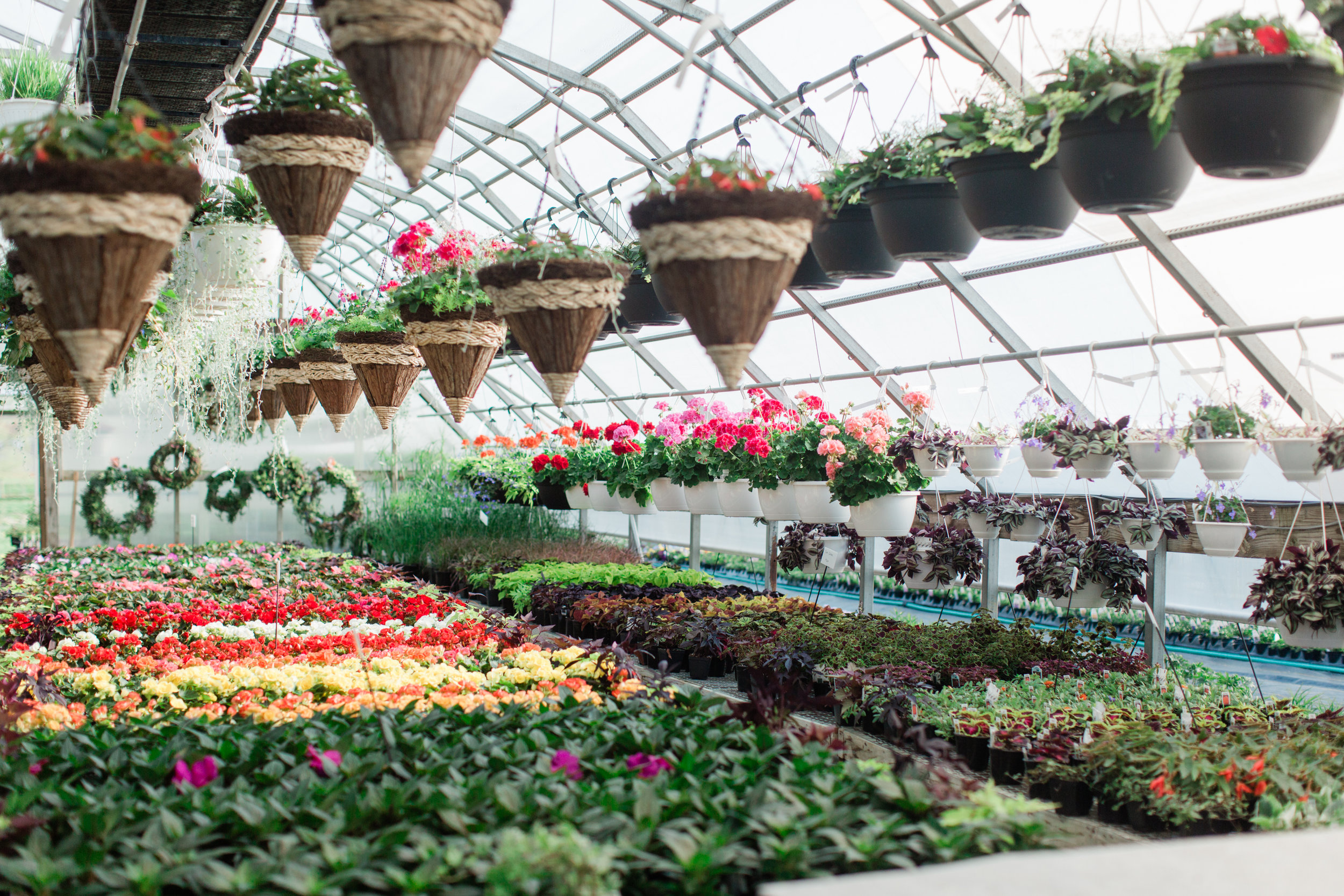Greenhouse-7.jpg