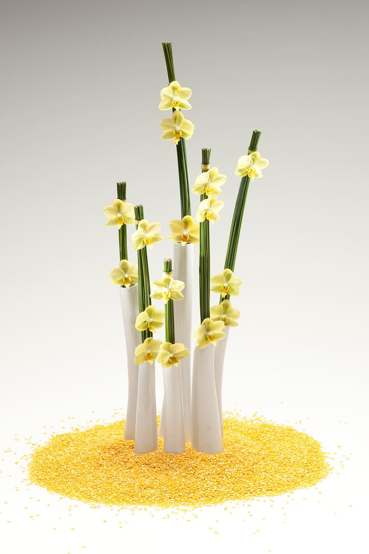 07) david-ragg-monograph-flowers-07.jpg