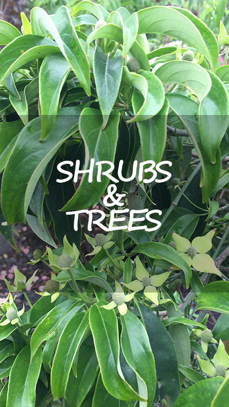shrubs and trees