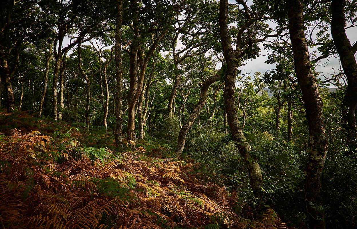 Oak and Ferns create a unique atmosphere.