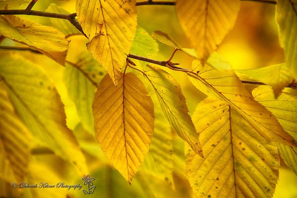 Autumn Leaves by Debbie Kittner. All rights reserved 2016