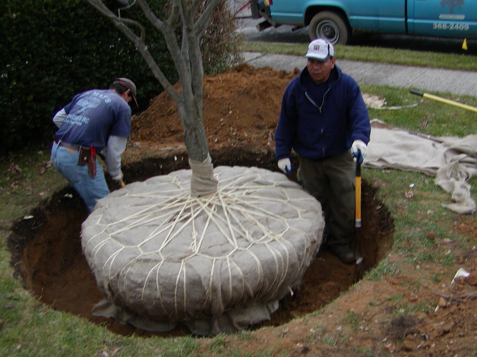 Tree Moving La May S Tree Service Inc