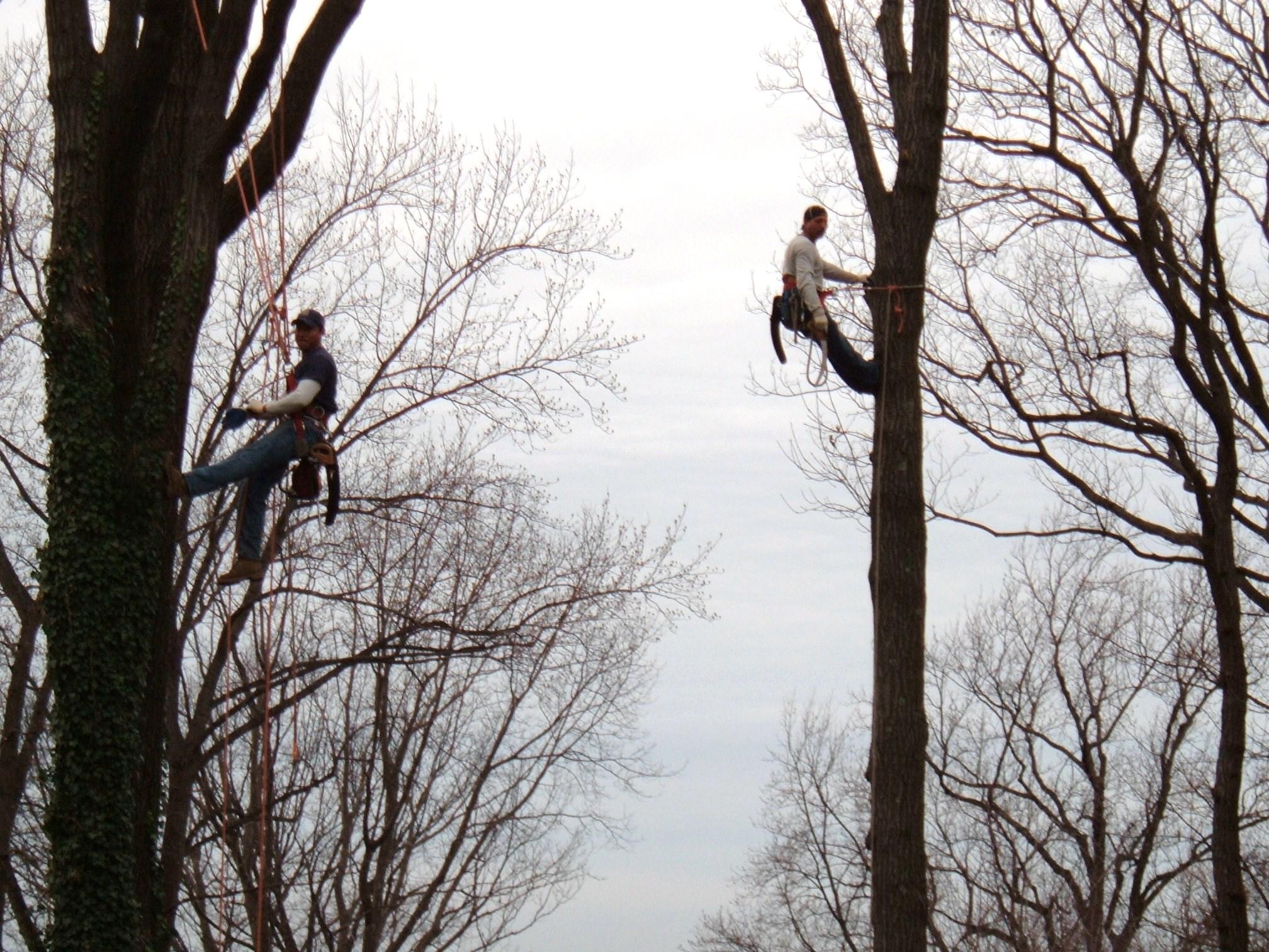 pruning (2).jpg