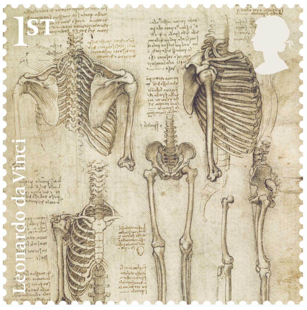 The skeleton (c.1510–11) on view at Cymru/National Museum Wales, Cardiff