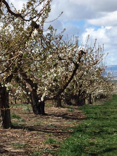 Orchard7.jpg