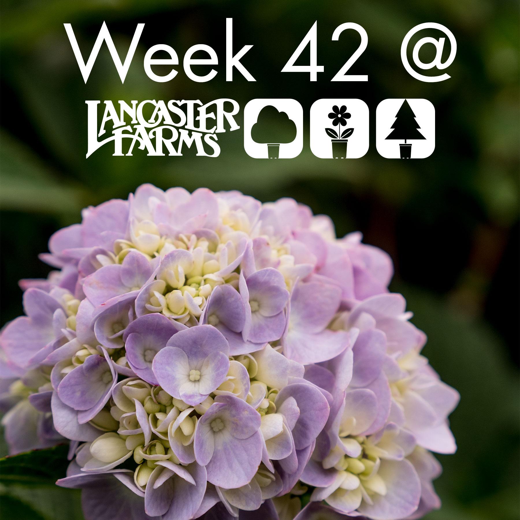 week42_header.jpg