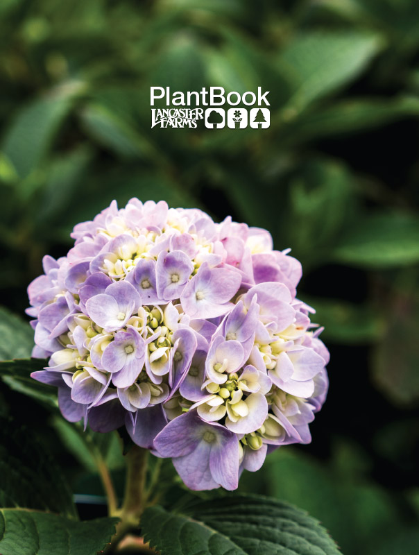 New PlantBook for 2018 - We have updated our catalog this year and have them available at the Plant Center. Our catalog is geared to the homeowner or client. Use the PlantBook as a showcase of the plants that you can provide. Pick up a few and leave them with your customers. Don't think of the catalog as an availability list, use it as a tool to inform and educate your client. We can also provide custom stickers with your information that you can affix to the catalog. Grab some copies the next time you're picking up plants!
