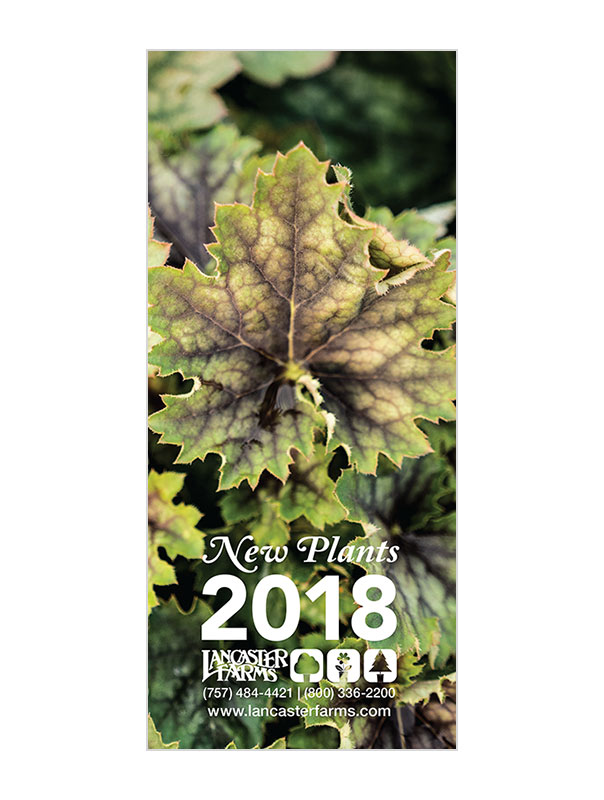 New Plants for 2018 - On the lookout for the latest varieties to hit the market or take a look at what we have added to our availability? Grab some copies of our New Plants for 2018 brochure and see what we have to offer.