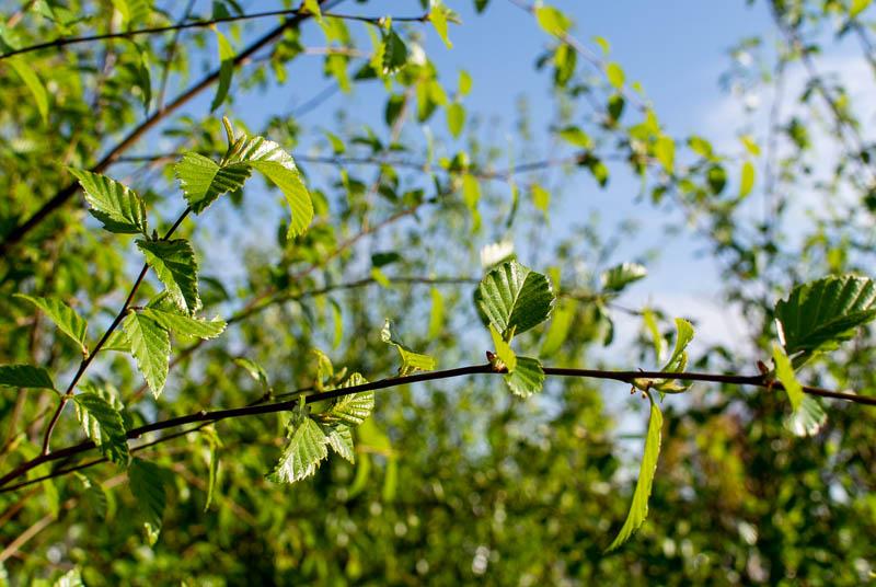 April_Trees-2.jpg