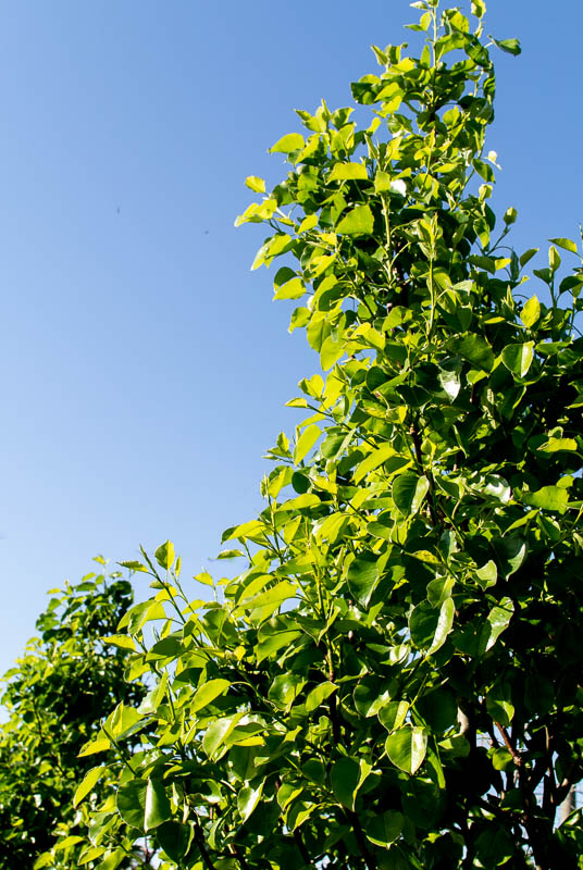 April_Trees-8.jpg