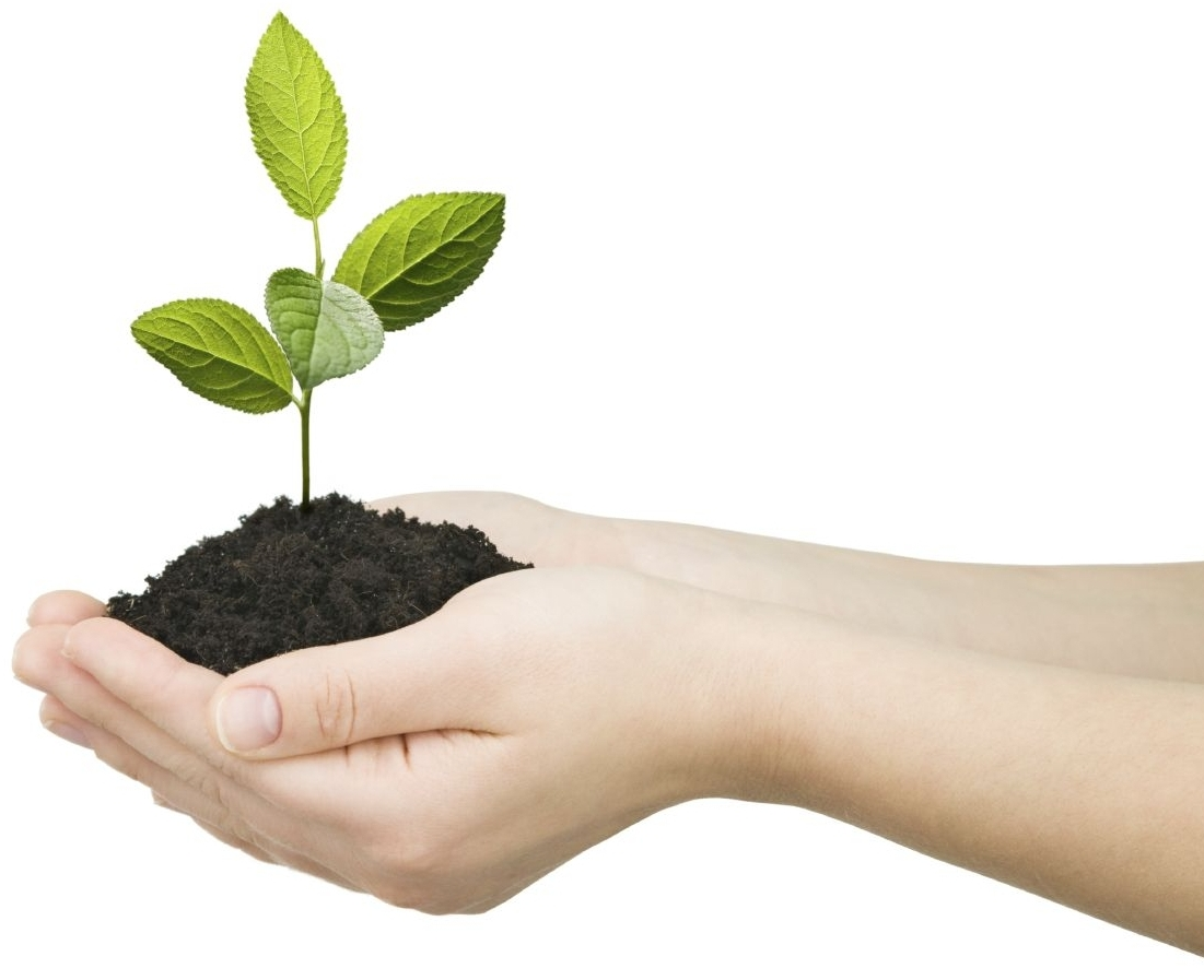 Hands-with-Plant-1.jpg