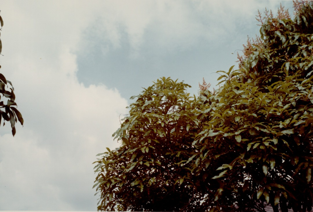 William Eggleston, Jamaica Botanicals Series, 1978, edition 11/35, Chromogenic dye coupler print, Collection of The Grace Museum, Gift of Eddie Green
