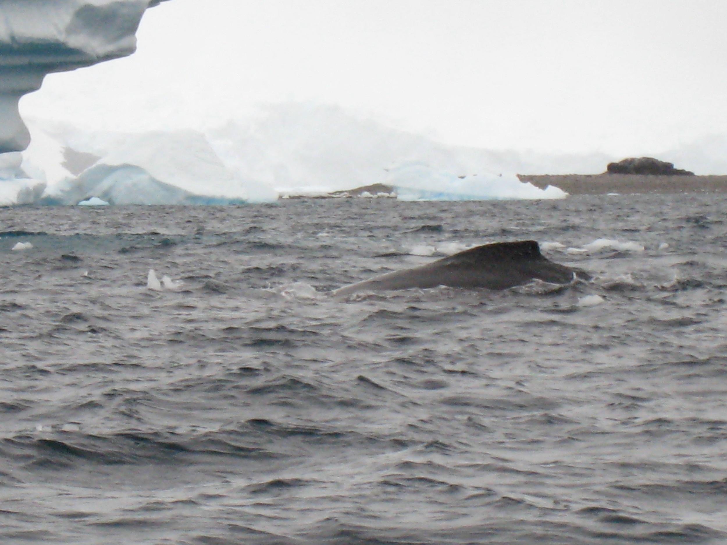 Antarctica - 4 of 33.jpg