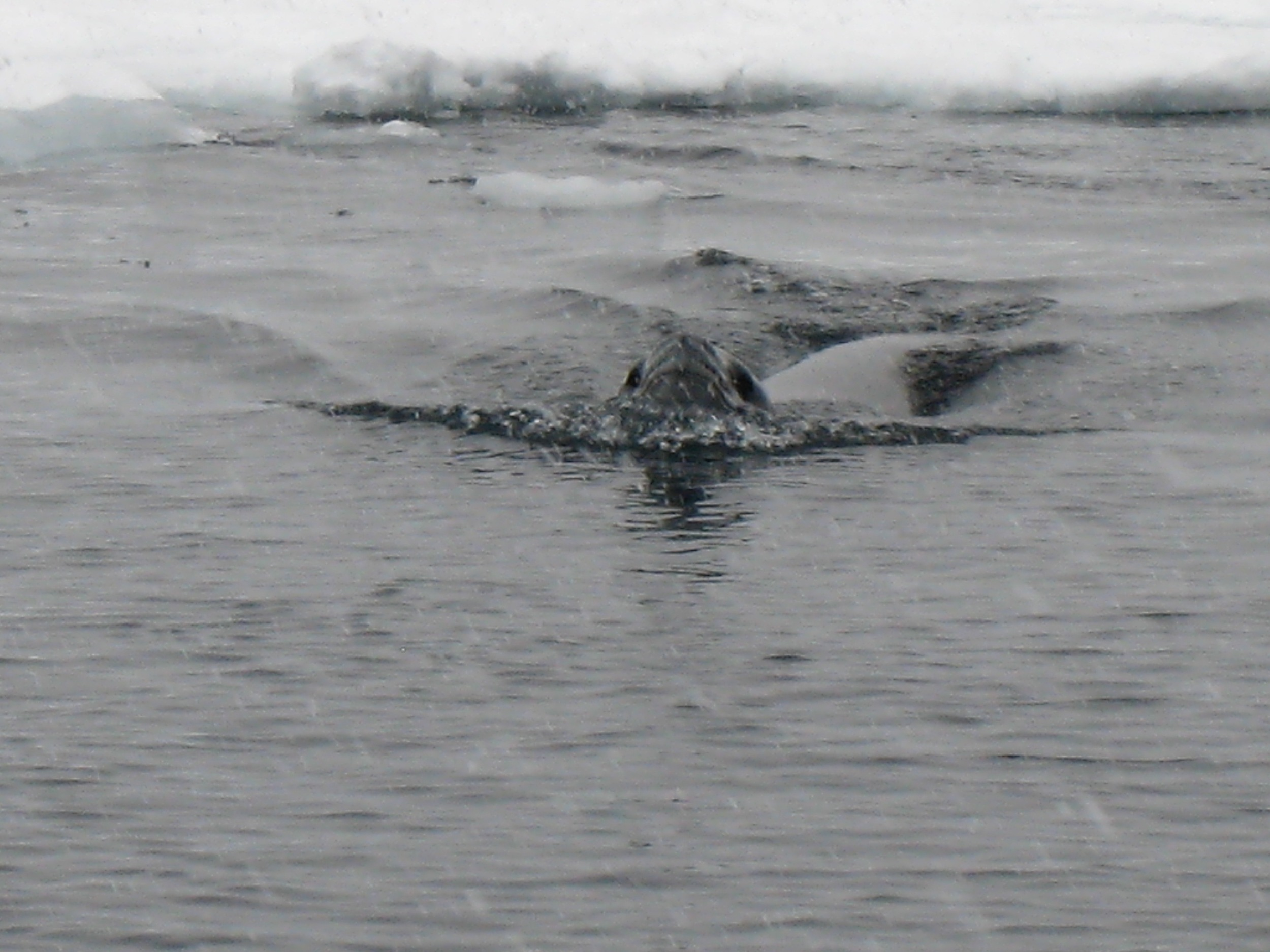 Antarctica - 17 of 33.jpg