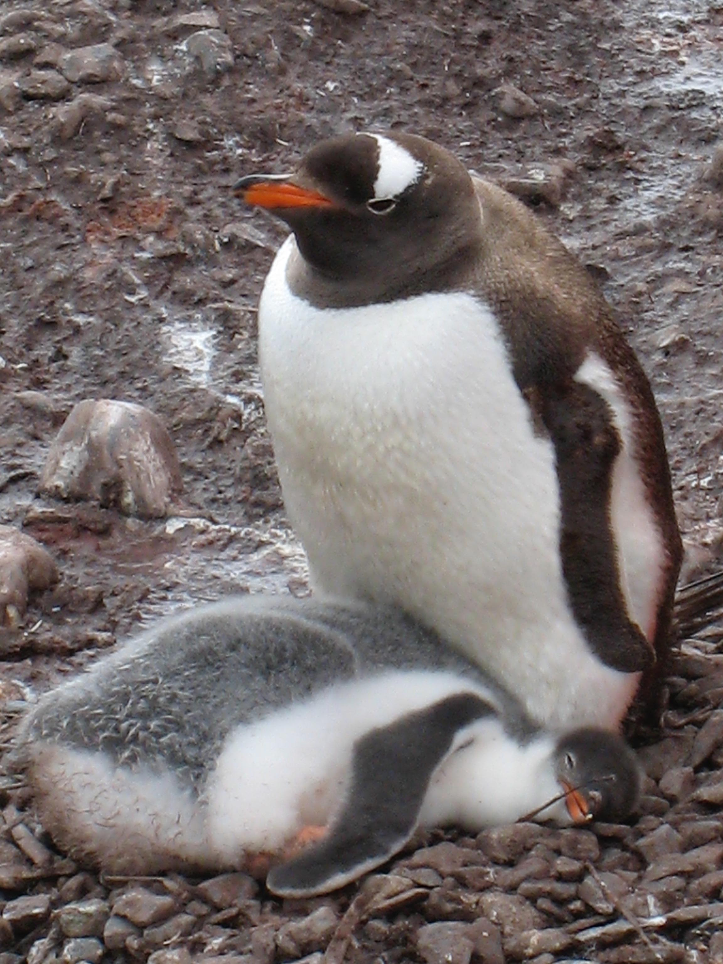 Antarctica - 20 of 33.jpg