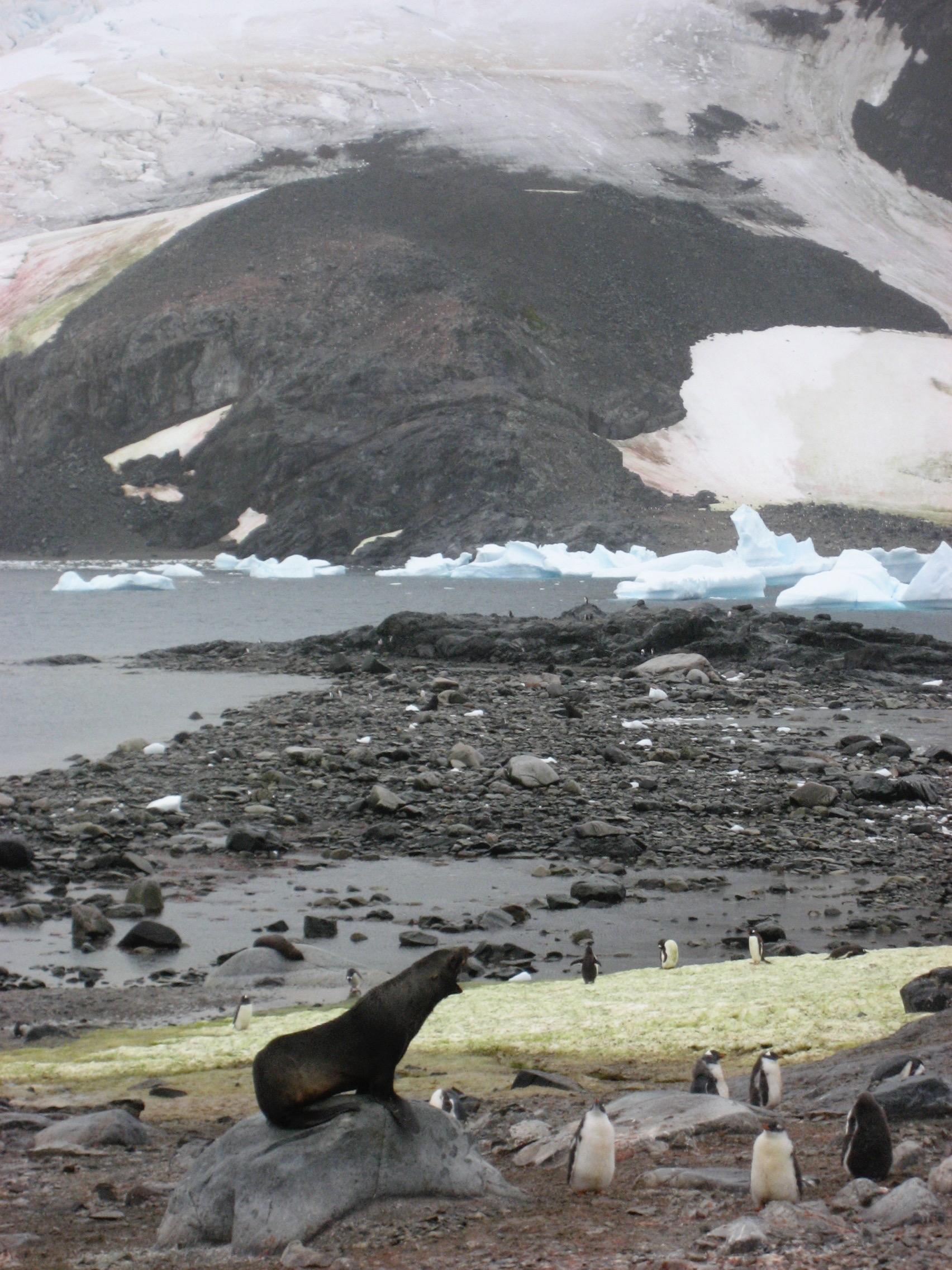 Antarctica - 30 of 33.jpg