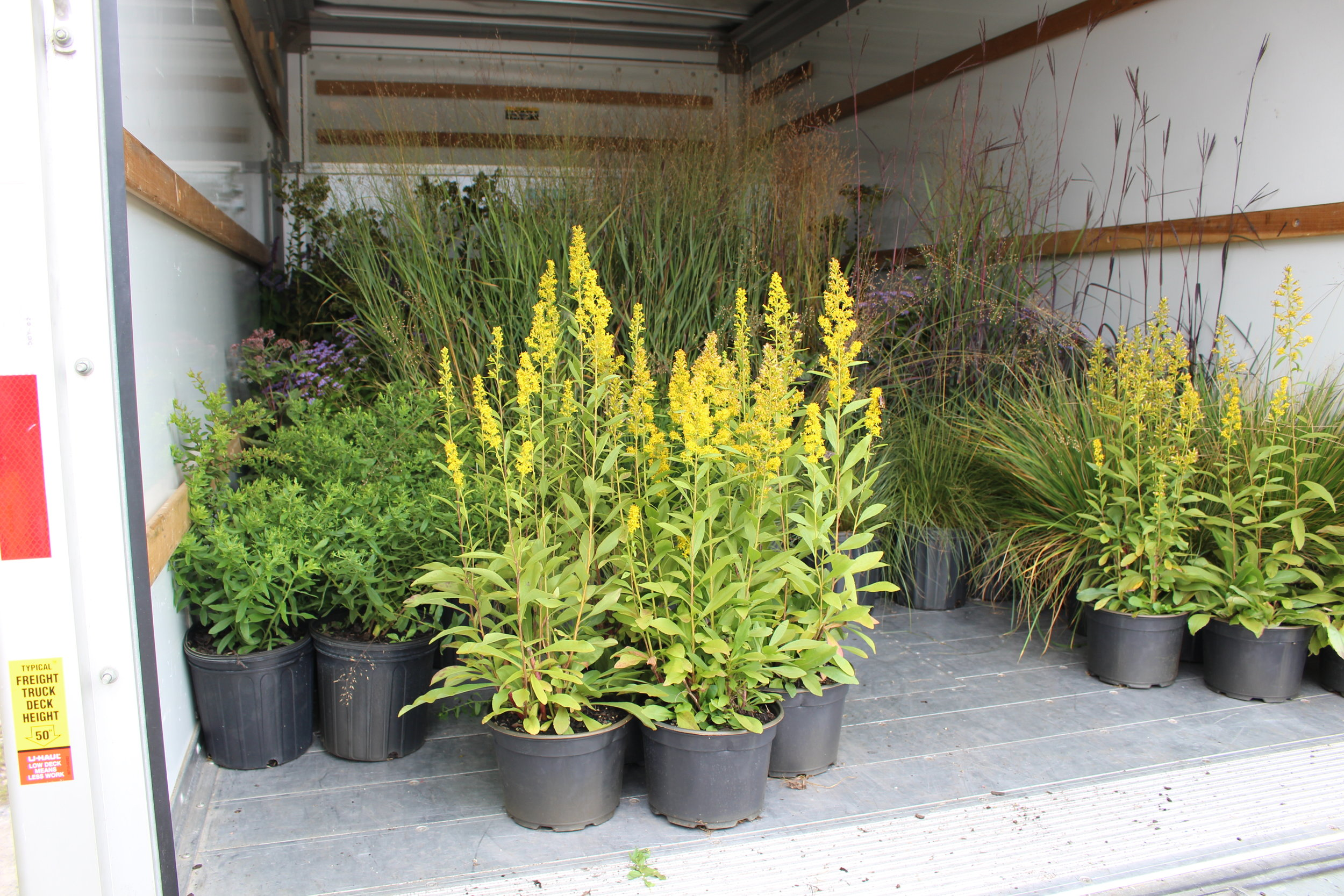 800 individual native plants from 40 species  -