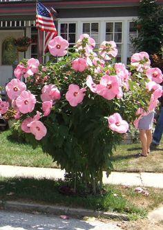 6e5c7369bc7cddc22ea585a6d420d15c--garden-makeover-rain-garden.jpg
