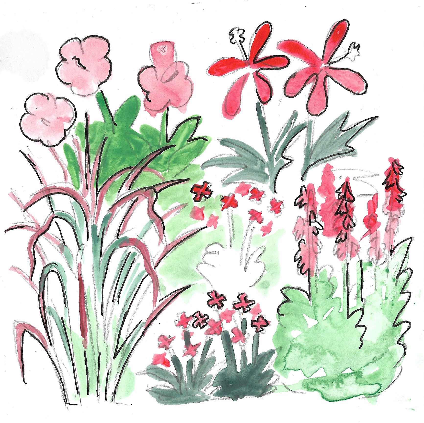 Drawing by Mackenzie of plants to be used in our Red Garden