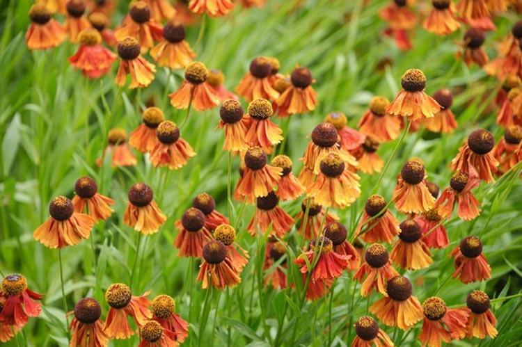 botanikfoto-517446-L.jpg
