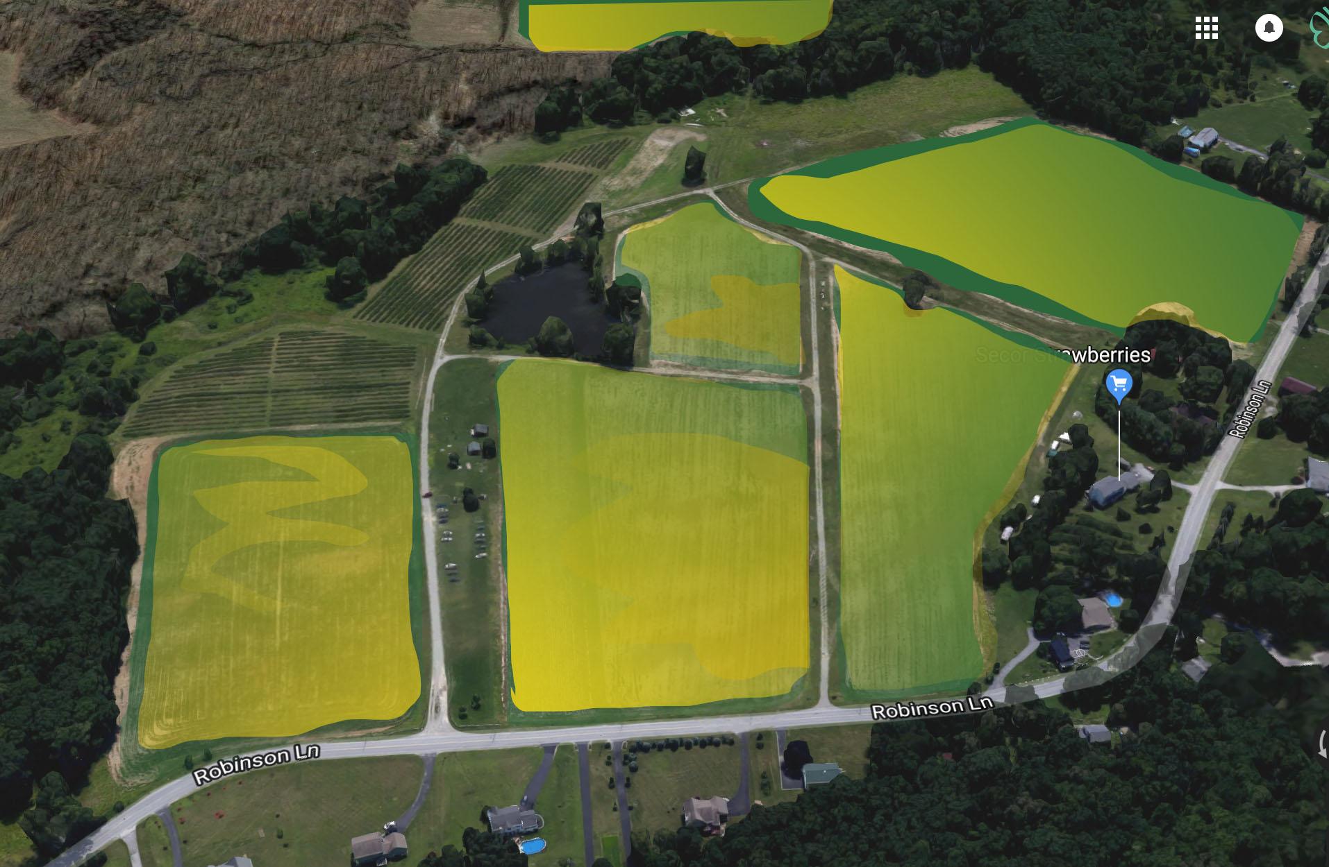 Sunflower Farm 1.jpg