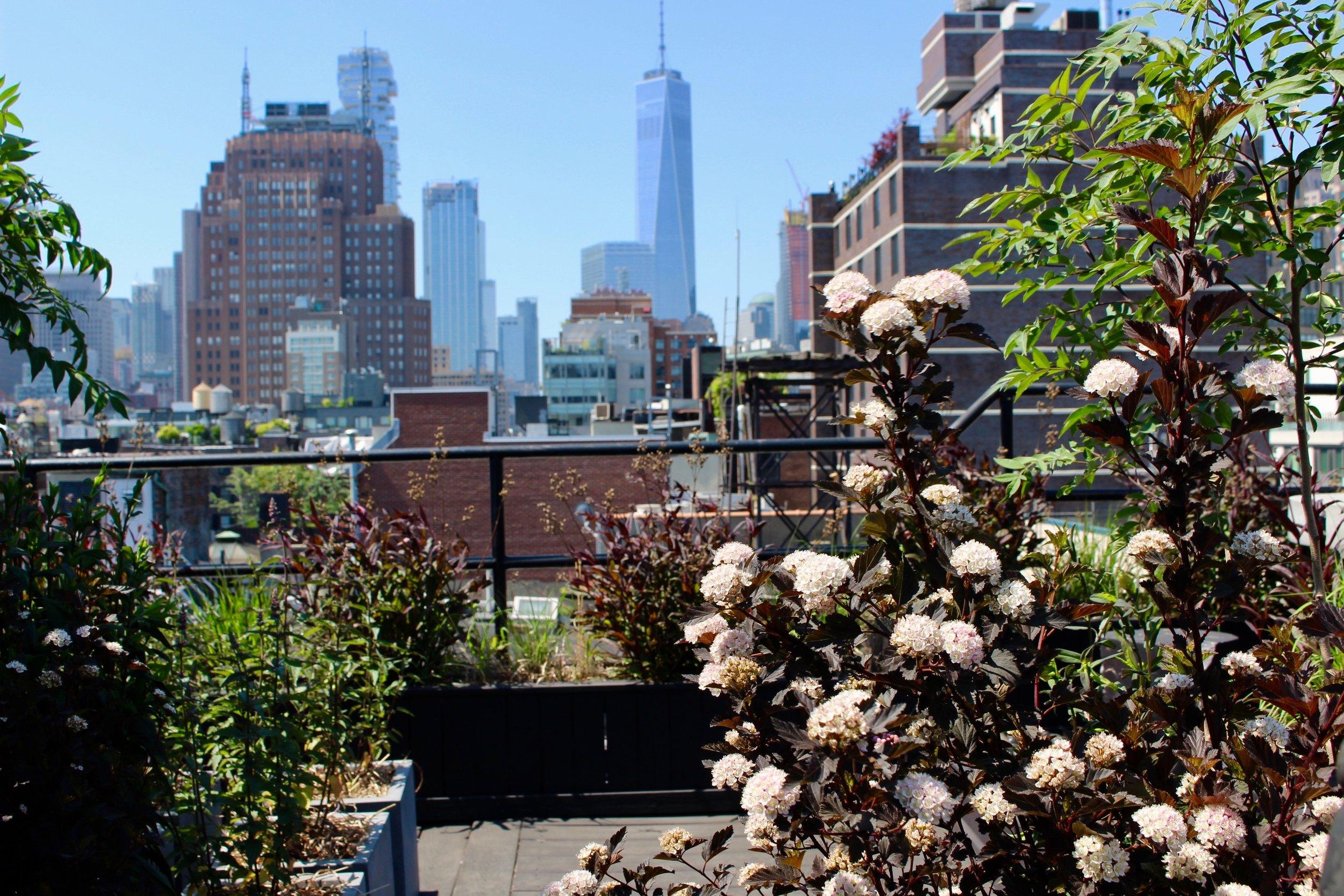 Native NY Gardens