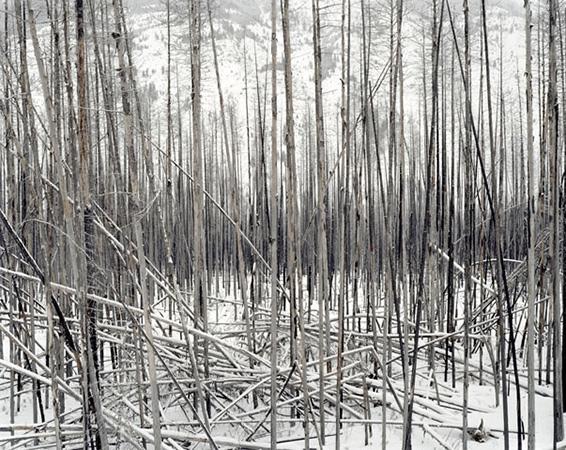 David Nadel - Sasha Wolf Gallery