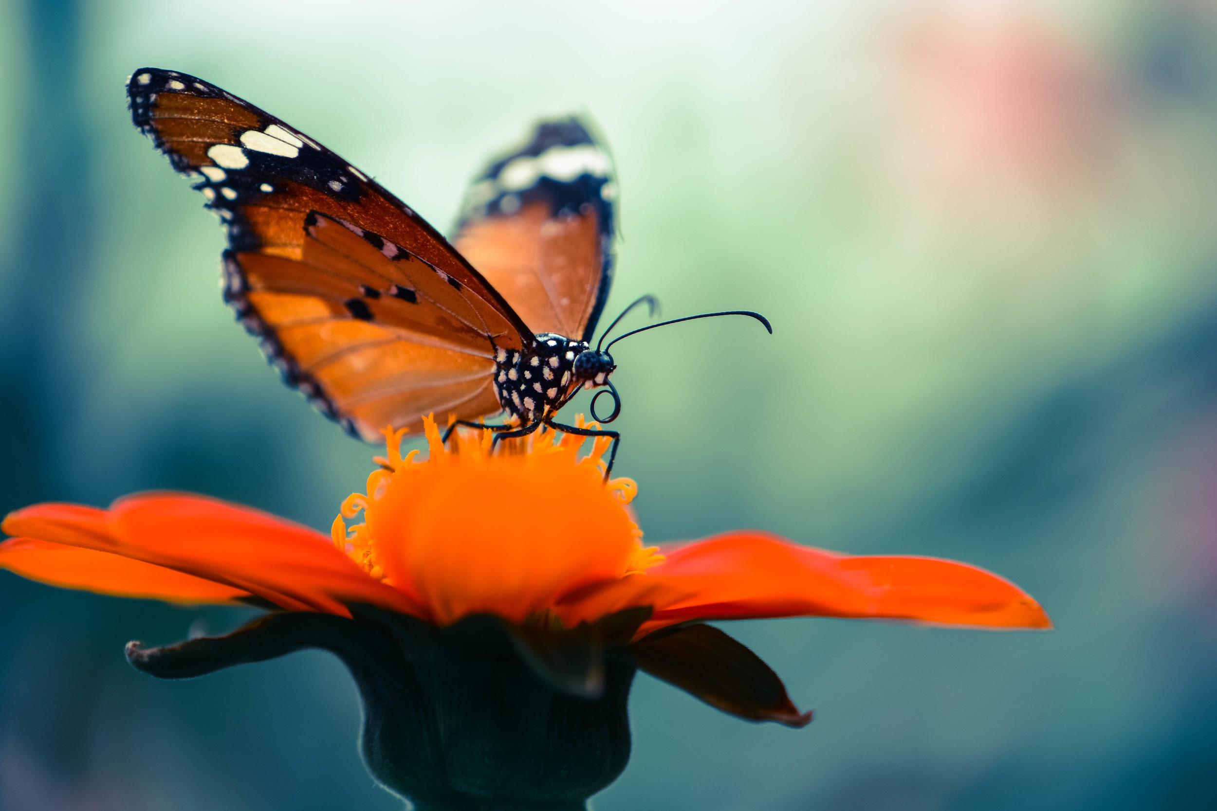 butterfly farm 6 (1 of 1).jpg